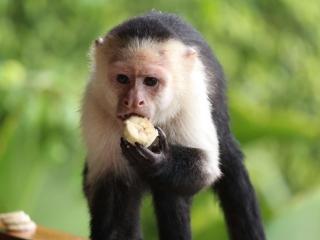 Gabrielle Ferrara: Brie's Art: Toucan, Costa Rica, photography, nature photography, monkey