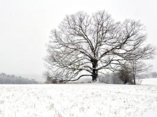 Michael Sandy, Michael Sandy Photography: Carbon County Oak. winter photography, tree, barren field, snow