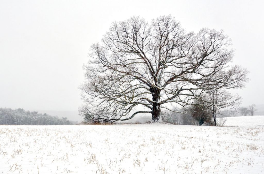 Michael Sandy, Michael Sandy Photography: Carbon County Oak. winter photography, tree, barren field, snow