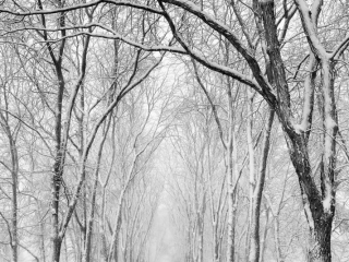 Michael Sandy, Michael Sandy Photography: Sunday Morning, snow storm, winter, quiet, tranquil, winter photography, trees