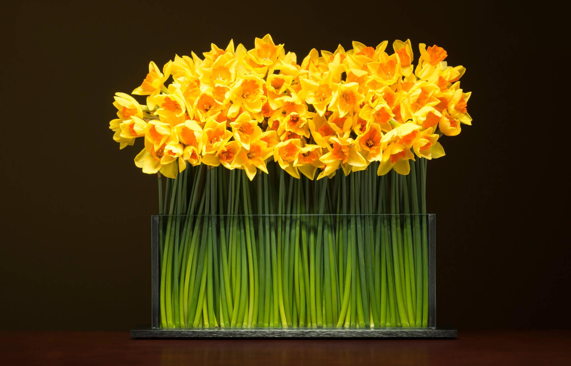 Stems Vases by Stephen White