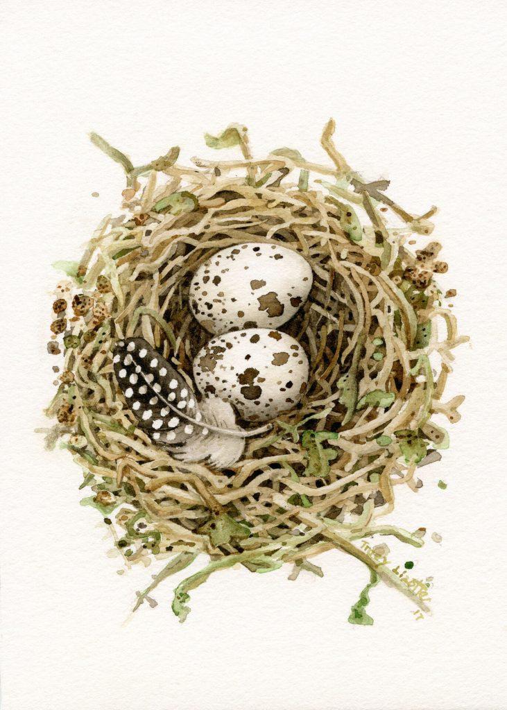 Tracy Lizotte Studios, quail egg, watercolor, fine art, handmade, tracy lizotte