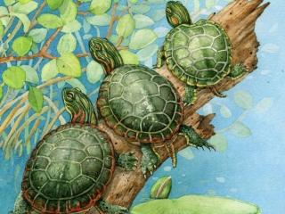 Tracy Lizotte Studios, turtles, watercolor, fine art, handmade, tracy lizotte