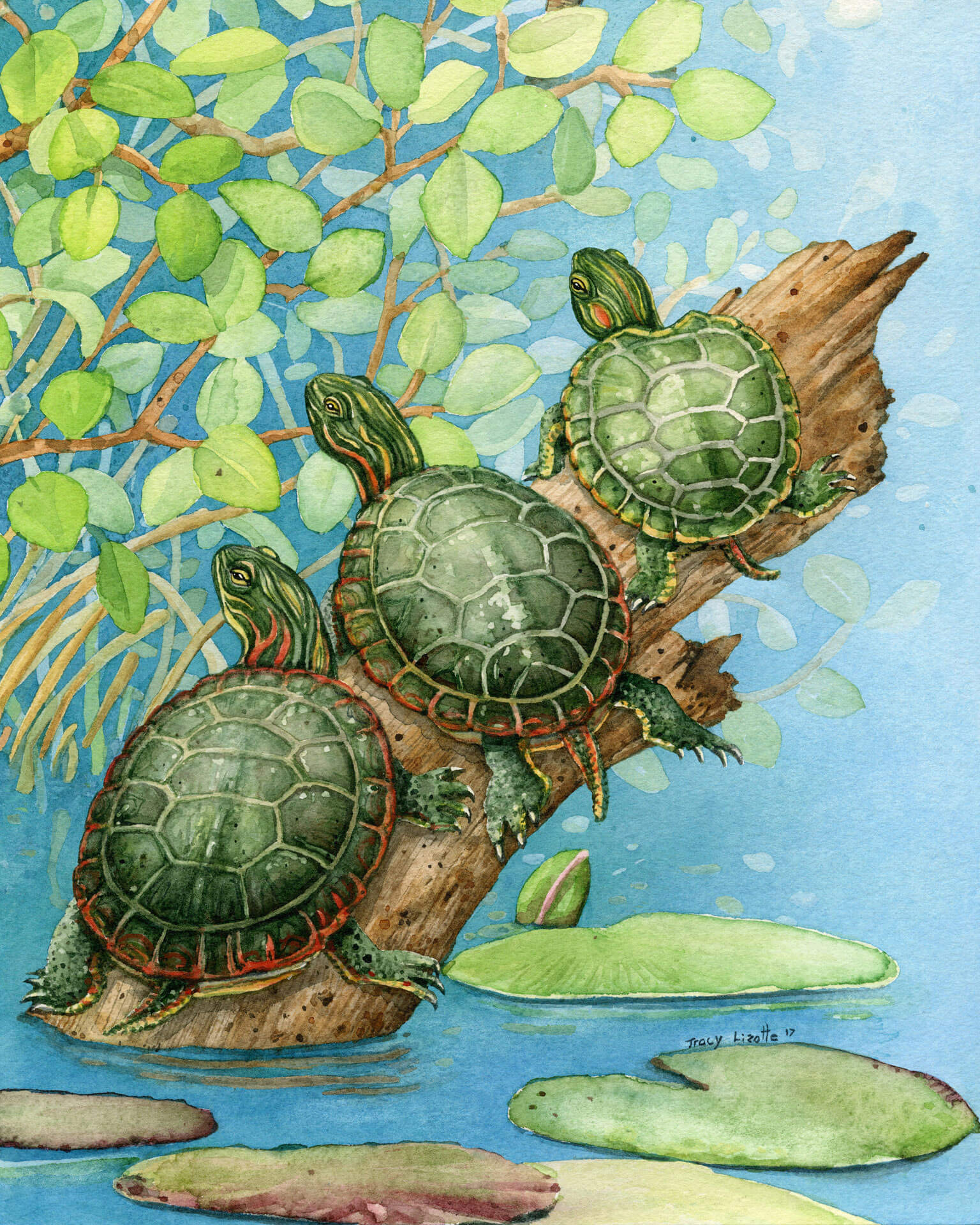 Tracy Lizotte Studios, turtles, watercolor, fine art, handmade, tracy lizotte